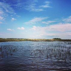 #everglades #floride #aligator Mountains, Beach, Water, Travel, Outdoor, Gripe Water, Outdoors, Viajes, The Beach