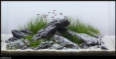 In this post I talk about the iwagumi style of aquascaping. Originally considered a part of the Nature aquarium style, it has with time grown to become a style on its own. Nano Aquarium, Aquarium Design, Aquarium Fish Tank, Planted Aquarium, Fish Tanks, Fish Tank Terrarium, Aquascaping, Aquarium Landscape, Nature Aquarium
