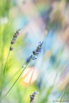 by Jose Maria Ramos Beautiful Flowers, Beautiful Pictures, Flower Wallpaper, Go Green, Bokeh, Belle Photo, Bunt, Wild Flowers, Nature Photography