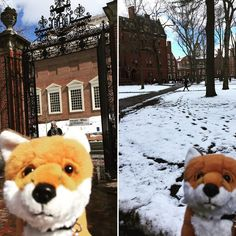 #AdmissionsVixen Rose decided to stop by Harvard and decided that our campus beats Harvard Yard any day of the week! #ourschoolsprettier #harvarduniversity
