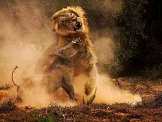THE TOP 10 Animal attacks | WARTHOG & WILD BOAR, Warthog & Wild Boar vs ...