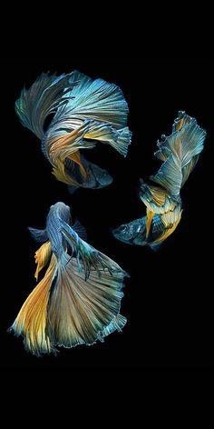 fish photography 6