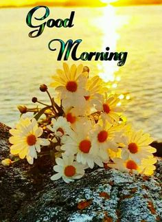 Good Morning Flowers Pictures, Good Morning Friends Images, Good Morning Beautiful Pictures, Good Morning Nature, Good Morning Happy Sunday, Good Morning Roses, Good Morning Cards, Morning Pictures, Good Morning Inspirational Images