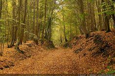 Nom du fichier=automne-haute_vallee_de_chevreuse-21.jpg Taille du fichier=2260Ko Dimensions du wallpaper / de la photo HD : 2406x1600 Image ajoutée le : 23 Septembre 2012