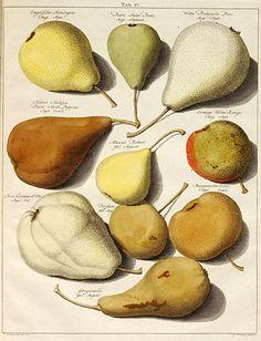 Fruits byJohann Koop (1771).