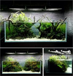 fish tank landscaping - Google Search