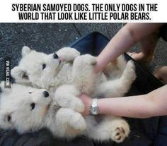 Don't we all want one of these :')