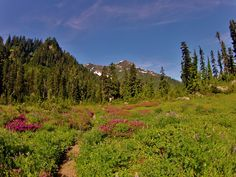 Jaw dropping hikes in Olympic National Park.
