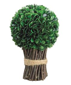Another great find on #zulily! Dried-Look Boxwood Bundle #zulilyfinds