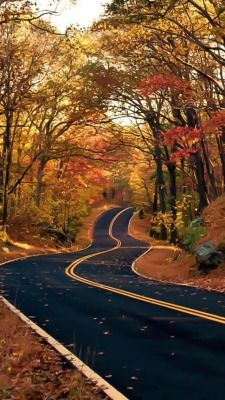 Low Cost Insurance Plan For The Welfare Of Your Loved Ones O Hushed October Morning Mild Fall Pictures, Fall Photos, Nature Photos, Beautiful Roads, Beautiful World, Fall Background, Autumn Scenes, Autumn Aesthetic, All Nature