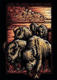 illustrations - buffalo