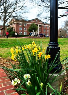 Davidson College - Time for the lilies to bloom outside of Chambers! (Such a gorgeous campus) <3