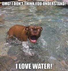 Funny Dog Pictures--me too