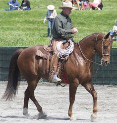 Buck Brannaman The Horse Whisper