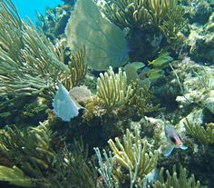 """""""Snorkeler's Menu"""" Fish, coral, shapes and colours of every description #Snorkel #GrandCayman"""