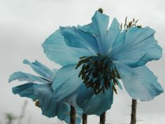 mountain flowers - Google Search