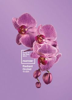 Pantone Radiant Orchid - the new colour trend for 2014. Imagine all the beautiful #mohair creations to be made in this colour...