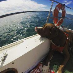 "Brooke Huie on Instagram: ""#dogdaysofsummer #westmarine"""