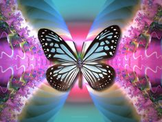 blue  abstract Butterfly Wallpaper   Butterfly Blue, abstract, blue, Butterfly, pink