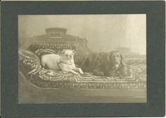 c.1900 oversized mounted photo of a pug and spaniel lying on a heavily patterned recamier. No identification of photographer (or dogs). From bendale collection