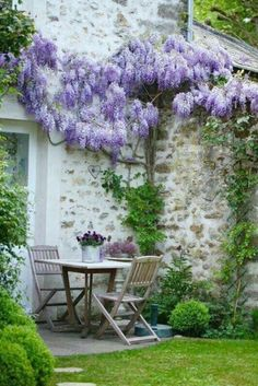 Wisteria and Outdoor Furniture | Content in a Cottage
