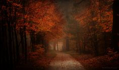 "radivs: "" Autumn, Deafness, & Heavy by Nelleke Pieters 