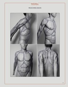 anatomy for the artist pdf download