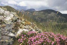 Trilha para o Pico das Agulhas Negras - Parque Nacional de Itatiaia - Pesquisa Google