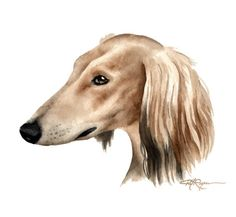 Saluki Dog Watercolor Painting Art Print Signed by Artist DJ Roget's