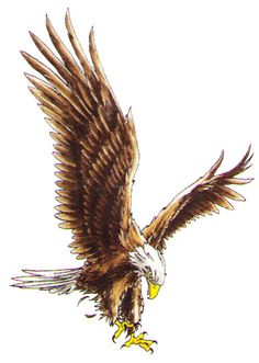 Details About Patriotic T Shirt Flying American Eagle Usa