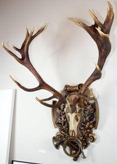 German Red Stag from Eulenburg Hunt of 1892 with Original Fürst-Pless Hunt Horn
