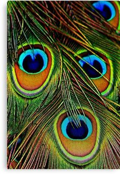 peacock eyes-close up feather / – ON ALIVE PEACOCK-. / nikon nikon zoom at 300 mm hand held / / Peacock Colors, Peacock Feathers, Pfau Tattoo, Peacock Images, Eye Close Up, Peacock Painting, Peacock Artwork, Krishna Wallpaper, Feather Art