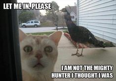 funny pictures scared cat