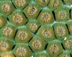 Joe Marino takes beautiful coral pictures.