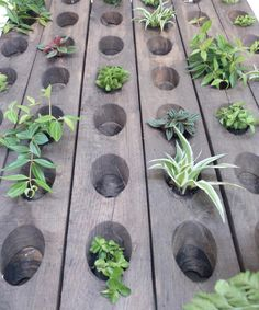 Mur végétal range bouteilles