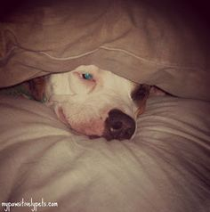 Pawsitively Pets: Wordless Wednesday: Can You See Me?