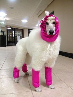 Standard Poodle leg covers - Pair. $30.00, via Etsy.