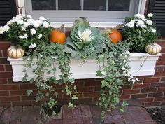Fall 2010 Window Bo Pinterest Box Plants And