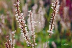 October nicolawhite photography ©