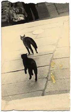 Masao YAMAMOTO - Refined, subtle and powerful Photography - Nakazora Series Yamamoto, Japanese Philosophy, Japan Photo, Art Studies, Photographic Prints, Asian Art, Cat Art, Black And White Photography, Fine Art Photography