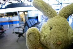 On Easter weekend 31 years ago, Travel Bunny came into my life. With the recent spurt of travel posts around #LexGoFurther, I thought you might like to know why.