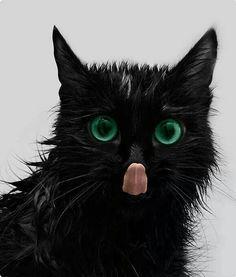 Cat lick! :D