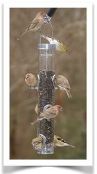 Classic Sunflower Bird Feeder - Droll Yankee