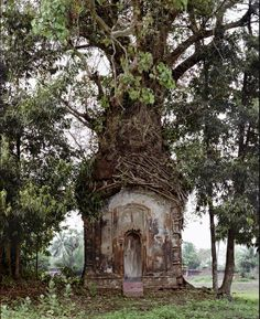 Resembles the tree from Princess Bride! :) Laura McPhee, Banyan Tree and Century Terracotta Temple, Attpur, West Bengal, India Hidden Places, Fairy Houses, Hobbit Houses, Hobbit Land, Houses Houses, Garden Houses, Dream Houses, Doll Houses, Abandoned Places