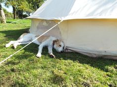 Dog relaxing in the glamping orchard