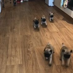 Cute Pug Puppies, Cute Pugs, Baby Puppies, Dogs And Puppies, Bulldog Puppies, Cute Little Animals, Cute Funny Animals, Pets, Pet Dogs