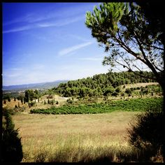 En Minervois, Domaine du Viala, recommandé par Vincent Pousson.