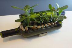 Wine Bottle Garden Succulent Planter Complete Kit