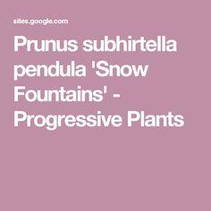Prunus subhirtella pendula 'Snow Fountains' - Progressive Plants