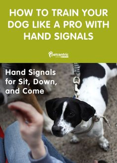 "Training your dog can be a fun way to bond with your pal! Get started with some hand signals. From there, you can move on to commands like ""sit"" and ""down."" Learn more at Petcentric.com."